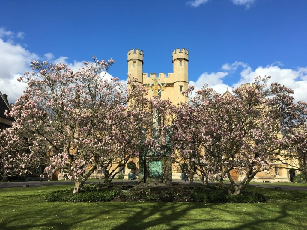 Magnolia Main Courtyard Lambeth Palace Gardens