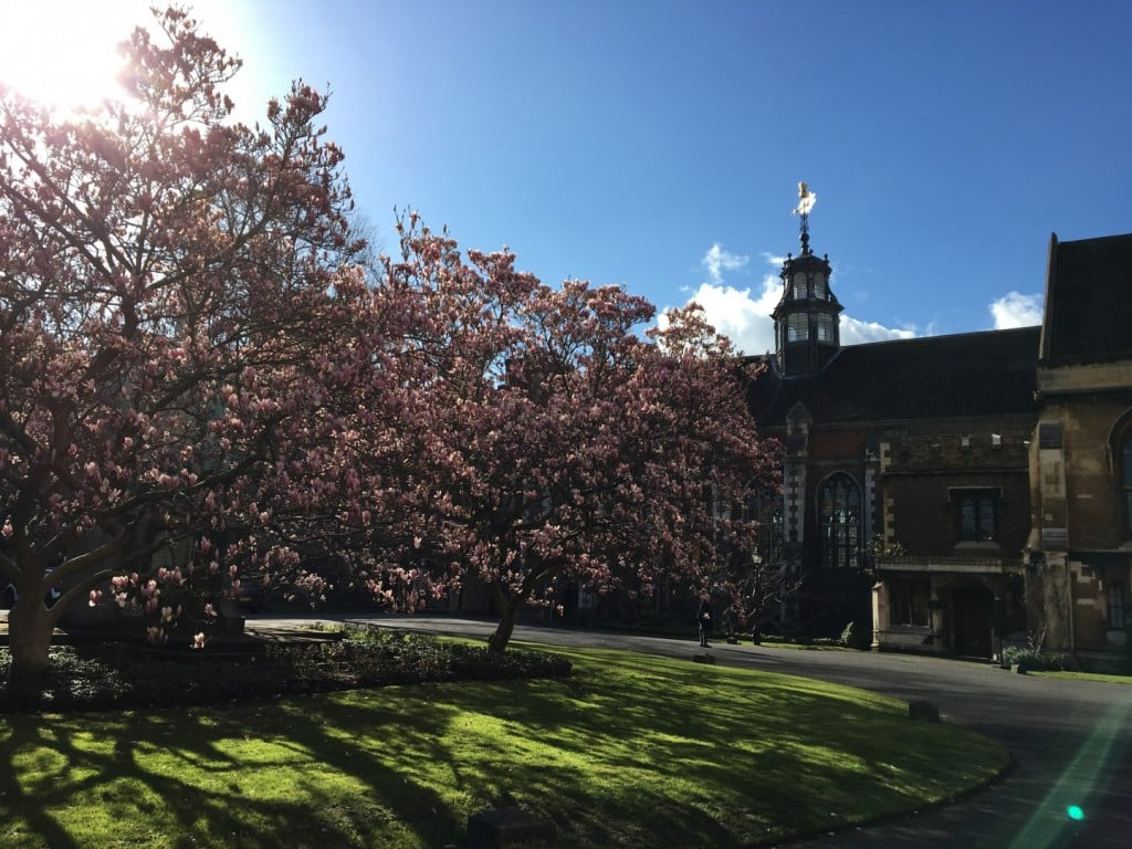 The Magnolia Soulangeana Tree in front of the Great Hall