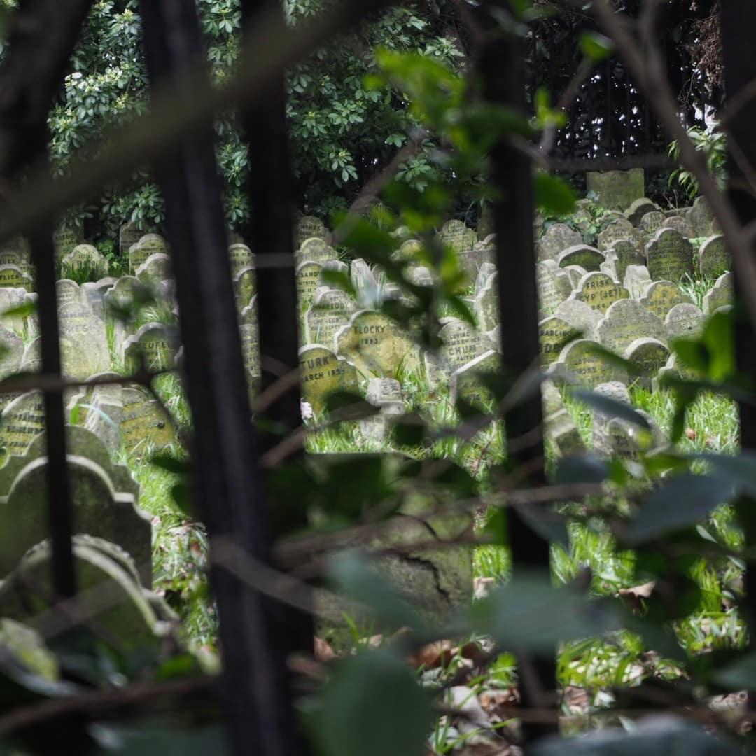 London Secret Pet Cemetery