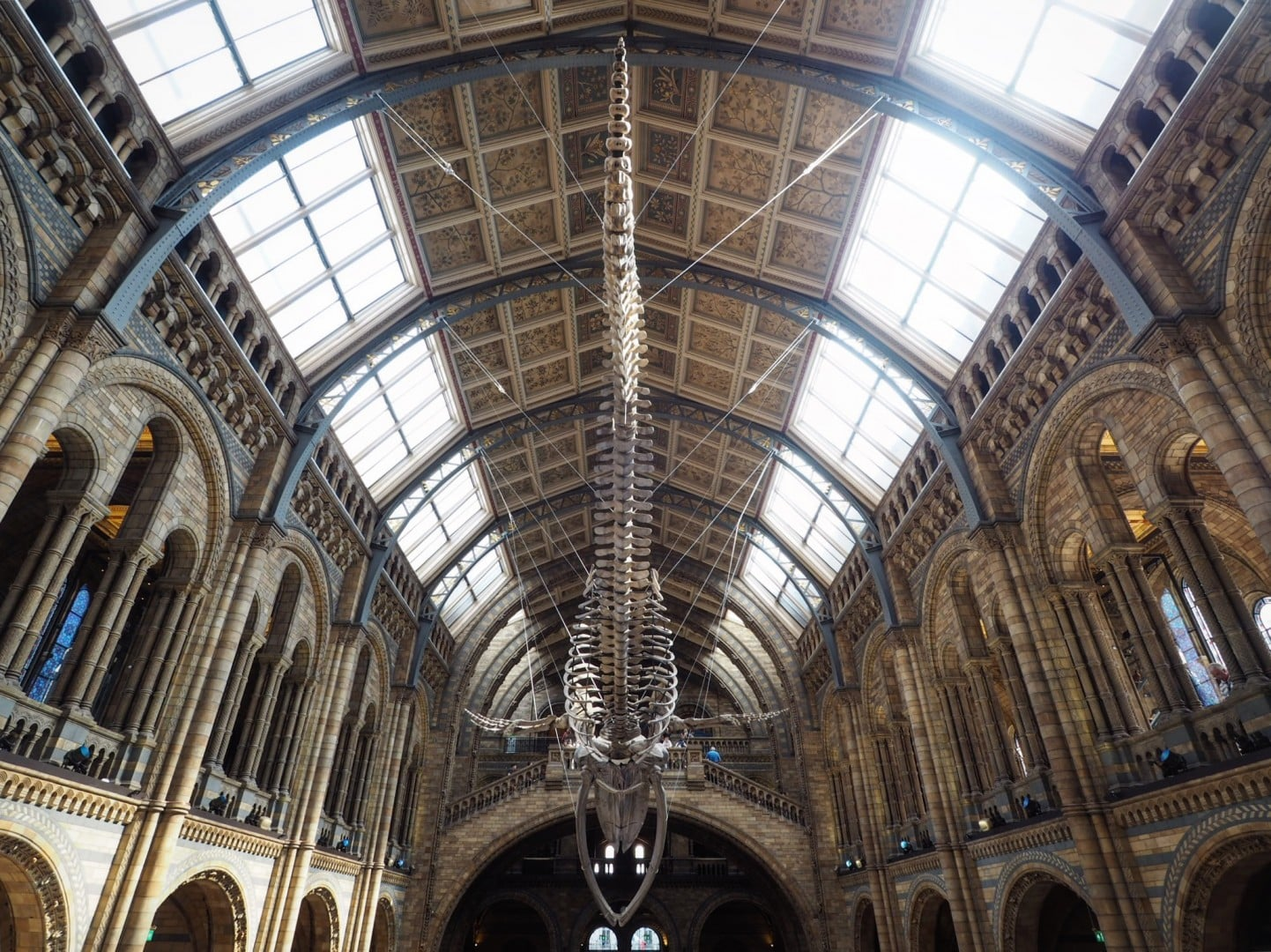 Natural History Museum's Whale