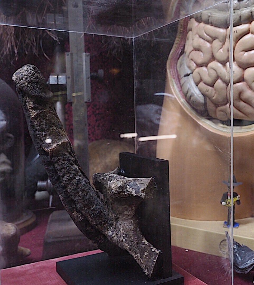 London's Weirdest Museum