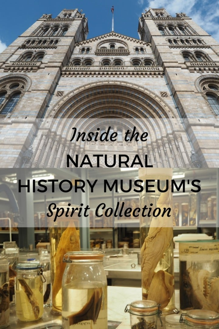 Natural History Museum Spirit Collection