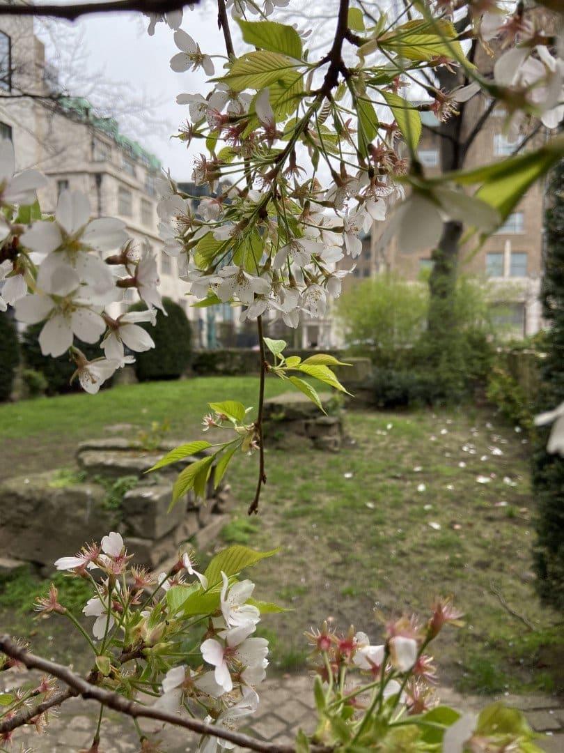 City Secret Gardens Walking Tour | Look Up London